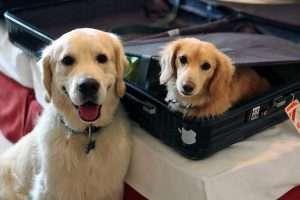 Host A Dog Weekend