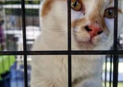 Cats from Marlboro Humane Society